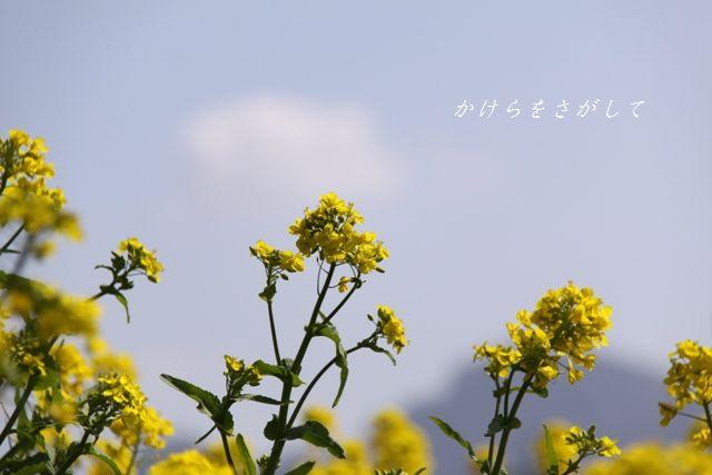 なのはな 2010(元気いっぱい).jpg