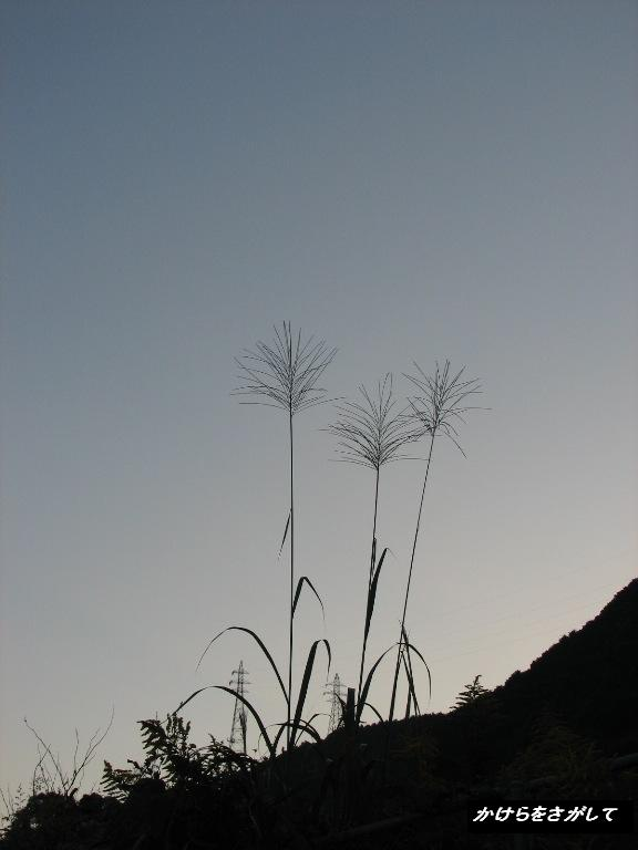 秋の朝 薄