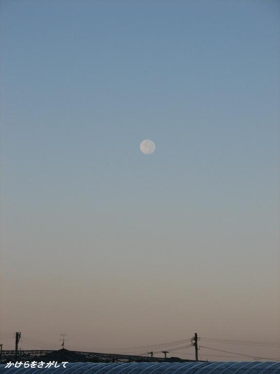 秋の朝の月