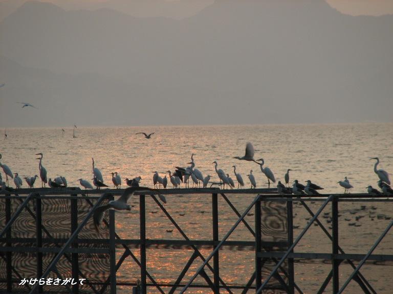 鳥たちの夕暮れ