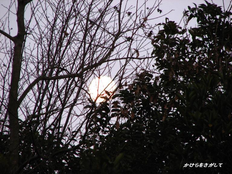 冬の朝 有明の月