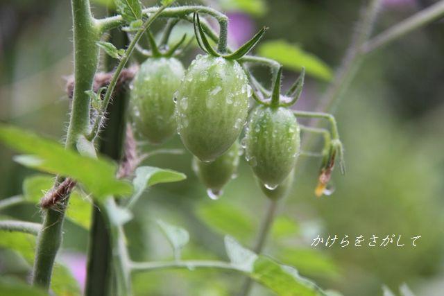 梅雨の雨とアイコ