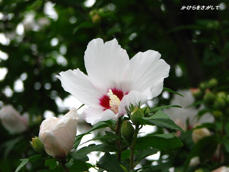 槿 2008 (信念)
