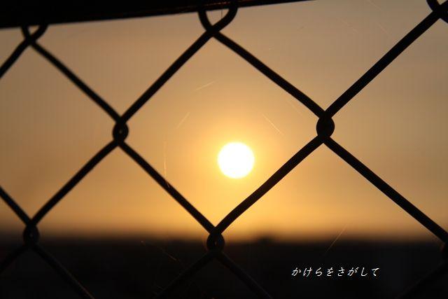 フェンス越しの夕陽.jpg