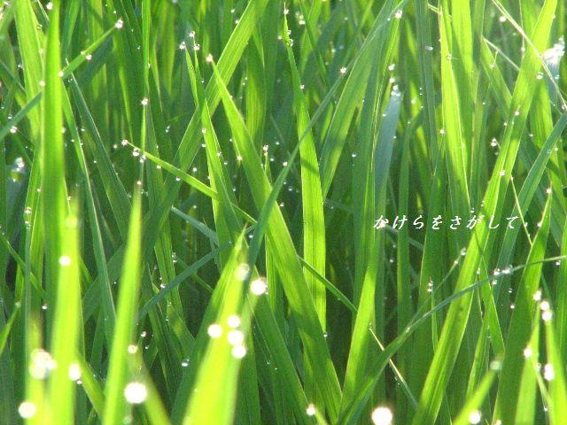 朝の宝石2010-2.jpg
