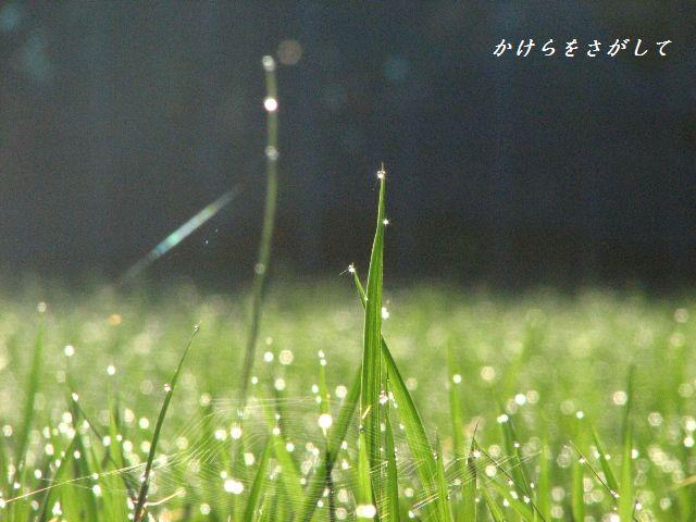 朝の宝石2010-4